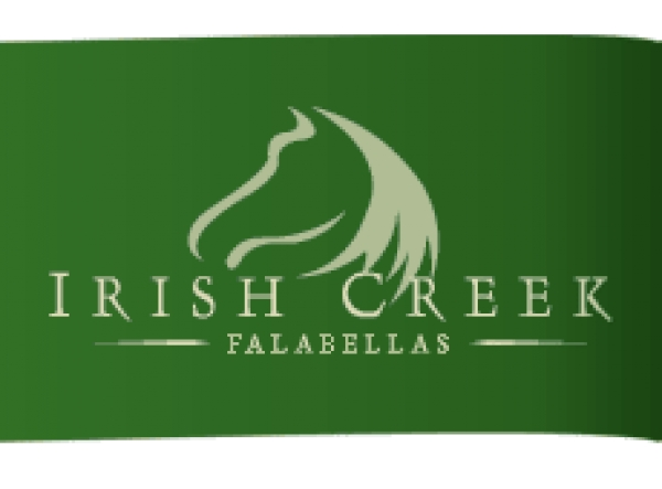 Irish Creek Falabella